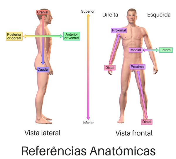 Referencias Anatomicas