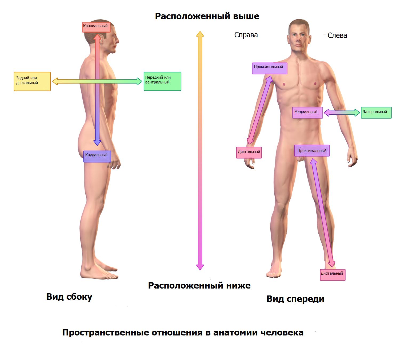 Ахондроплазия что это такое